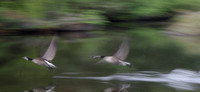 Hot Pursuit by Ritchie Leslie