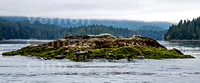 A Clayoquot Seals - Carol James